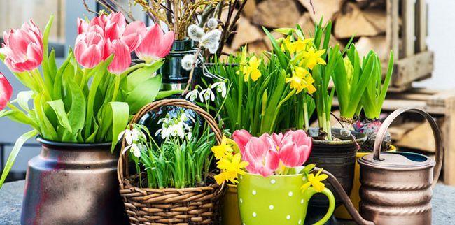 Ароматні рослини для дому