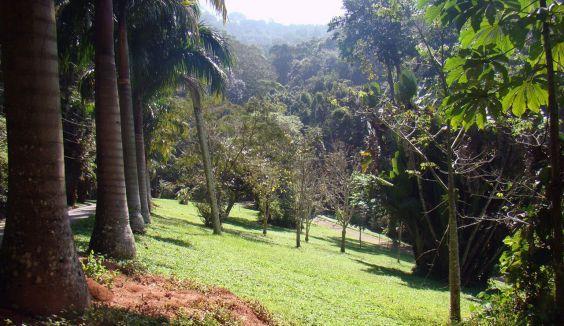 ліс Тіжука