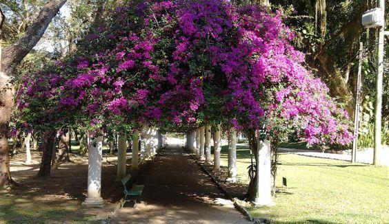 Ботанічний сад в Ріо 1