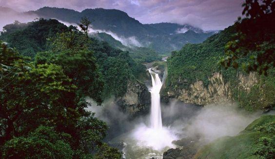 Красуня Амазонка. дощові ліси
