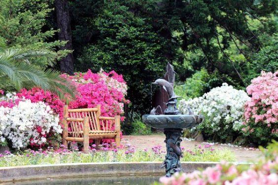 Батумський ботанічний сад 2