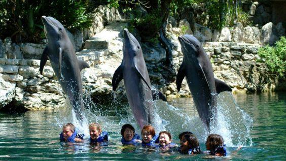 Дельфінарій парку «Шкарет»