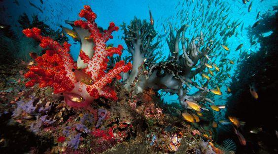 корали бухти