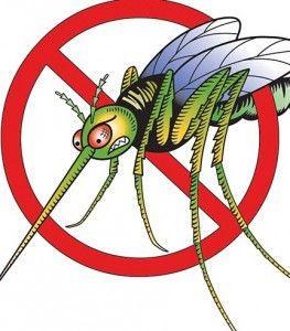 Як позбутися від комарів в квартирі