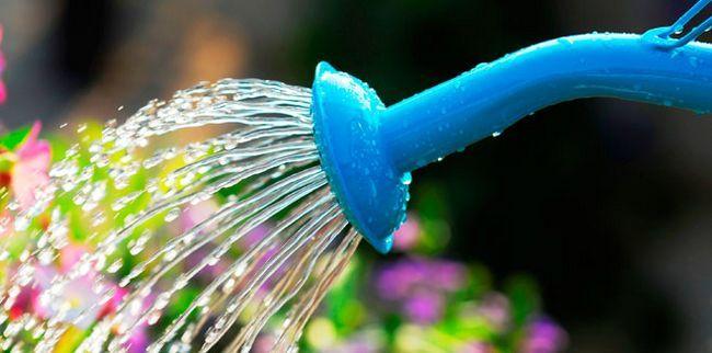 Як правильно поливати кімнатні рослини - рекомендації