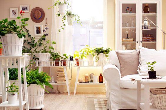 Рослини зроблять квартиру затишніше