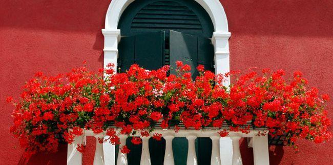 Які квіти посадити на балконі квартири