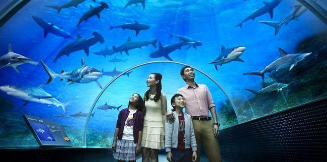 Сінгапурський «S.E.A. Aquarium »