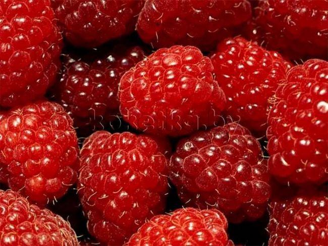лікарські ягоди