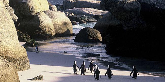 Кейптаунський пляж валуни, уподобаний пінгвінами