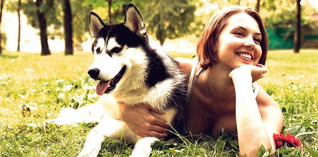 Найкращі собаки-компаньйони
